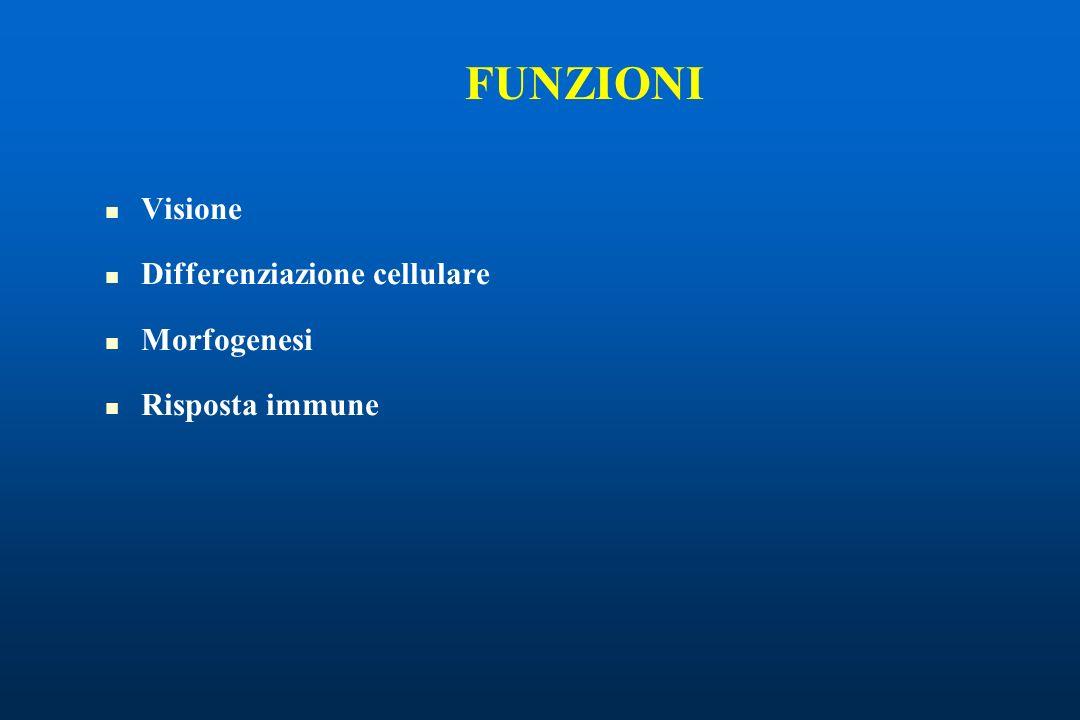 FUNZIONI Visione Differenziazione cellulare Morfogenesi