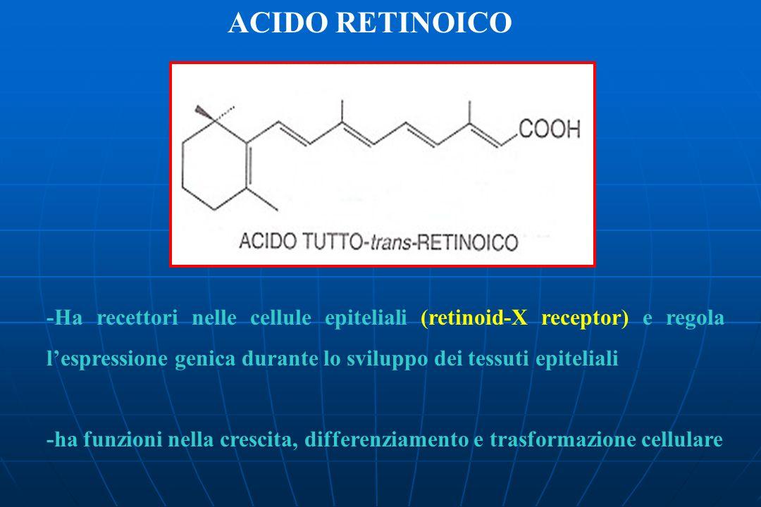 ACIDO RETINOICO -Ha recettori nelle cellule epiteliali (retinoid-X receptor) e regola l'espressione genica durante lo sviluppo dei tessuti epiteliali.