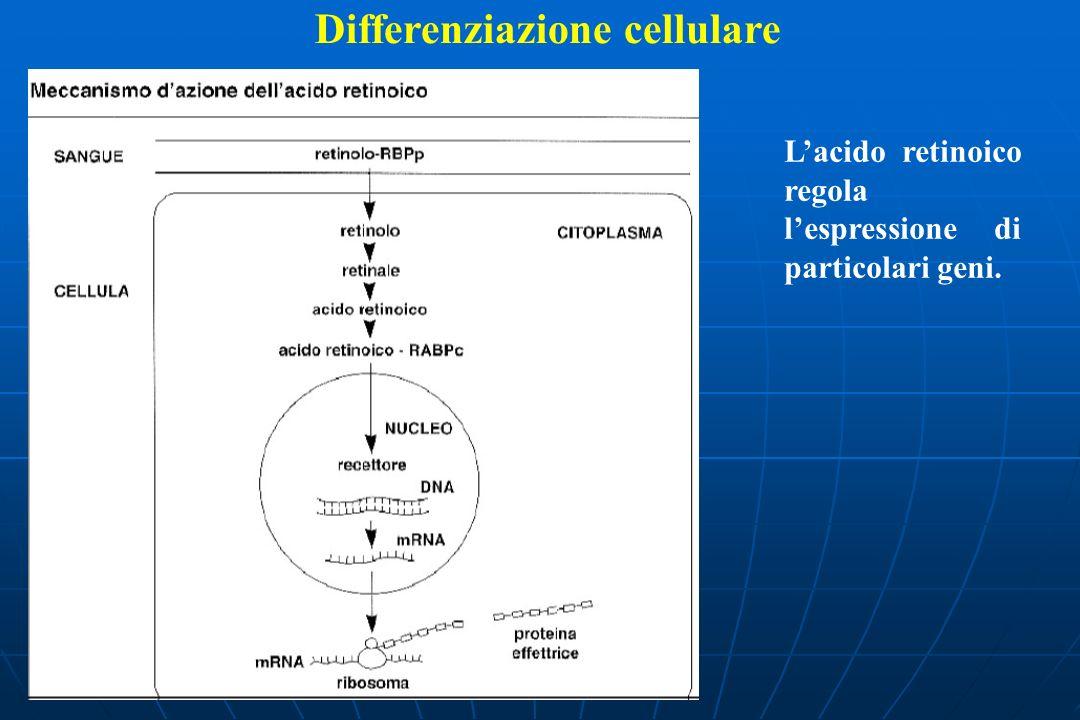 Differenziazione cellulare