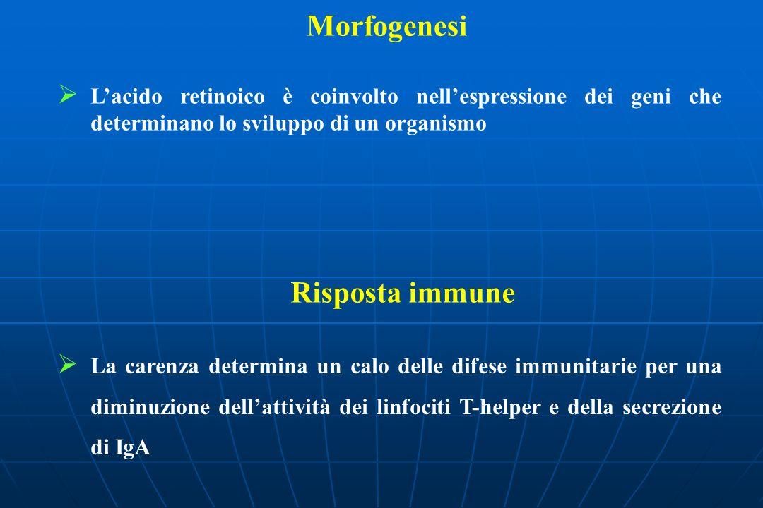 Morfogenesi Risposta immune