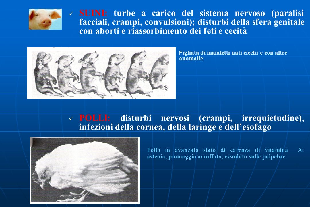 SUINI: turbe a carico del sistema nervoso (paralisi facciali, crampi, convulsioni); disturbi della sfera genitale con aborti e riassorbimento dei feti e cecità