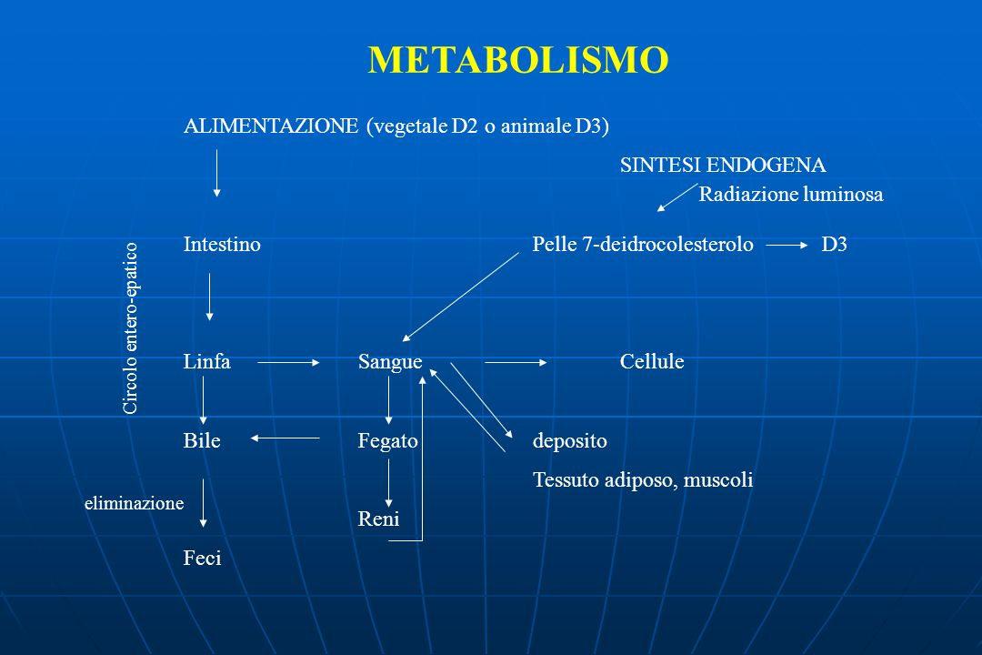 METABOLISMO ALIMENTAZIONE (vegetale D2 o animale D3) SINTESI ENDOGENA