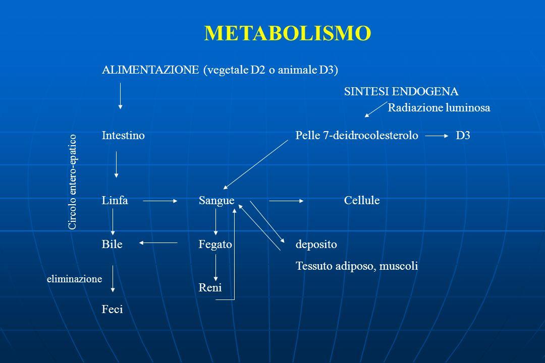 METABOLISMO ALIMENTAZIONE (vegetale D2 o animale D3) SINTESI ENDOGENA