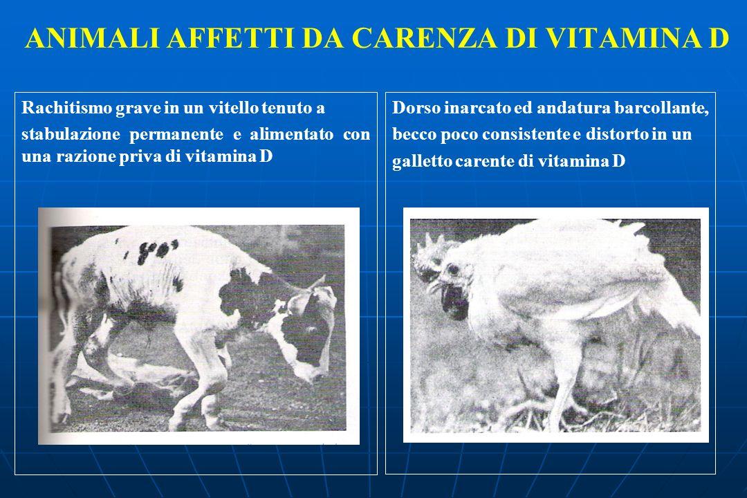 ANIMALI AFFETTI DA CARENZA DI VITAMINA D