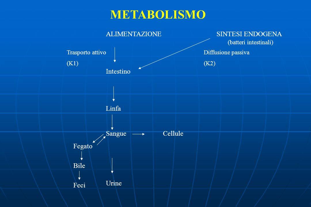 METABOLISMO ALIMENTAZIONE SINTESI ENDOGENA Intestino Linfa