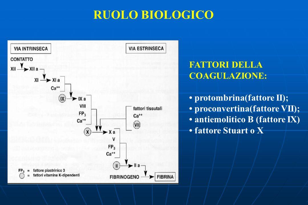 RUOLO BIOLOGICO FATTORI DELLA COAGULAZIONE: • protombrina(fattore II);