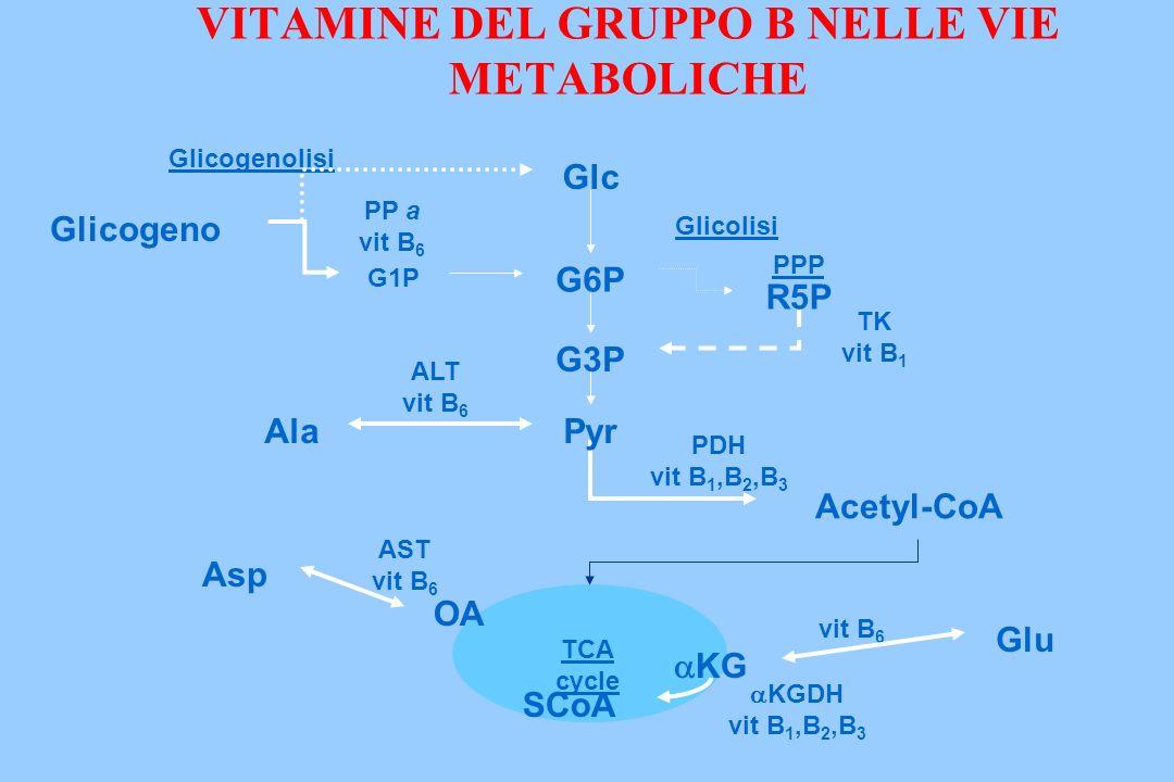 VITAMINE DEL GRUPPO B NELLE VIE METABOLICHE