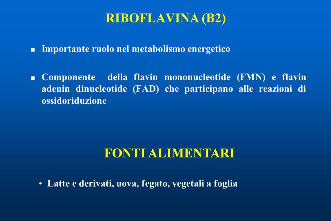 RIBOFLAVINA (B2) FONTI ALIMENTARI