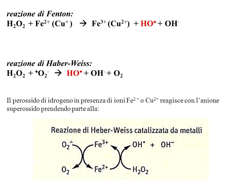 H2O2 + Fe2+ (Cu+ )  Fe3+ (Cu2+) + HO + OH-