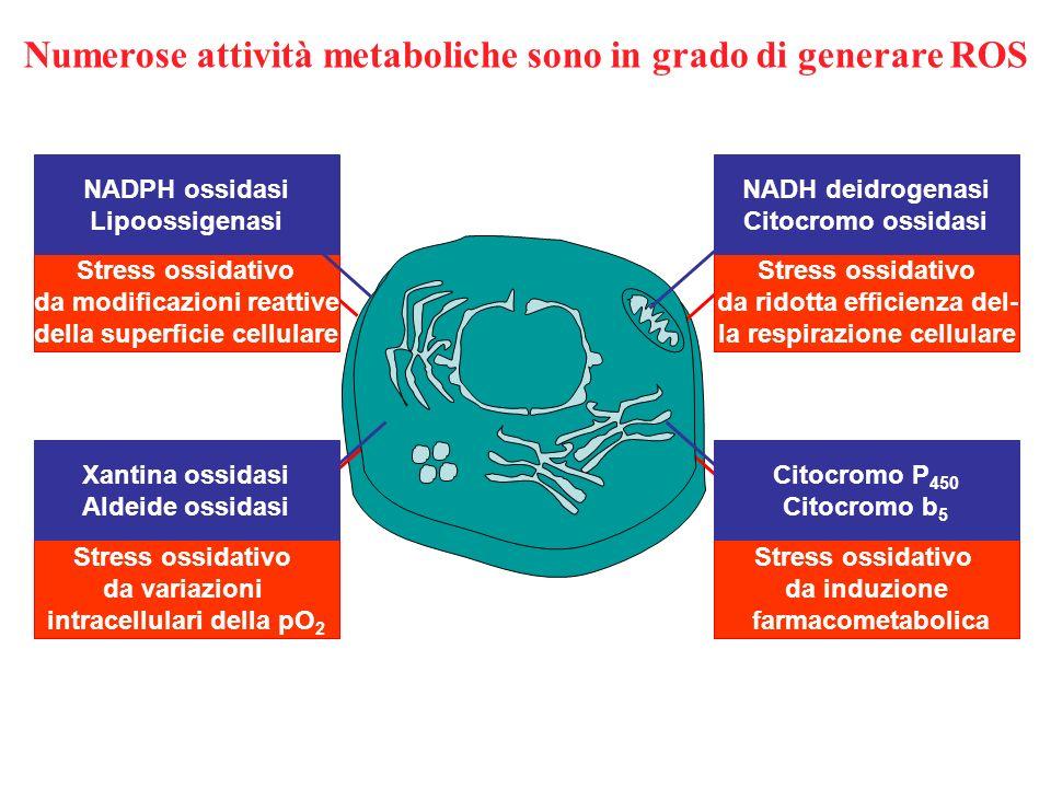 Numerose attività metaboliche sono in grado di generare ROS