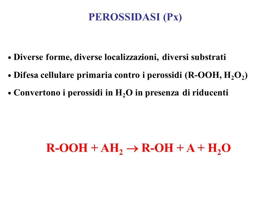 R-OOH + AH2  R-OH + A + H2O PEROSSIDASI (Px)