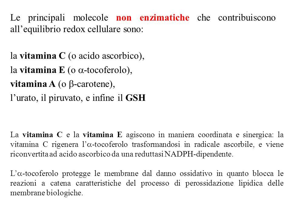 la vitamina C (o acido ascorbico), la vitamina E (o a-tocoferolo),