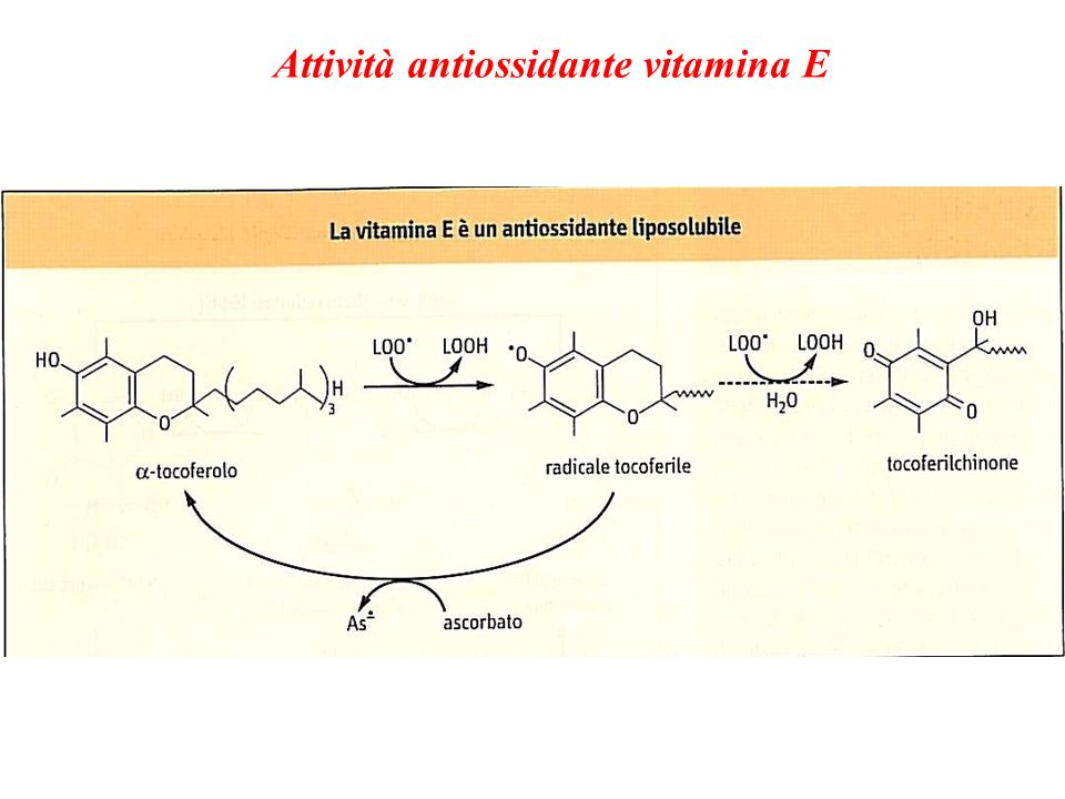 Attività antiossidante vitamina E