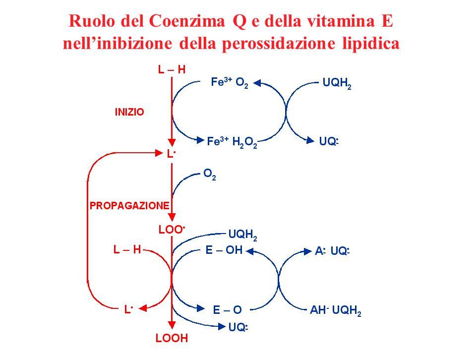 Ruolo del Coenzima Q e della vitamina E