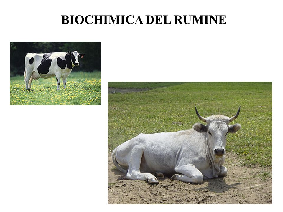BIOCHIMICA DEL RUMINE