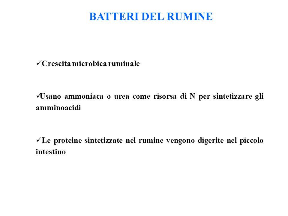 BATTERI DEL RUMINE Crescita microbica ruminale