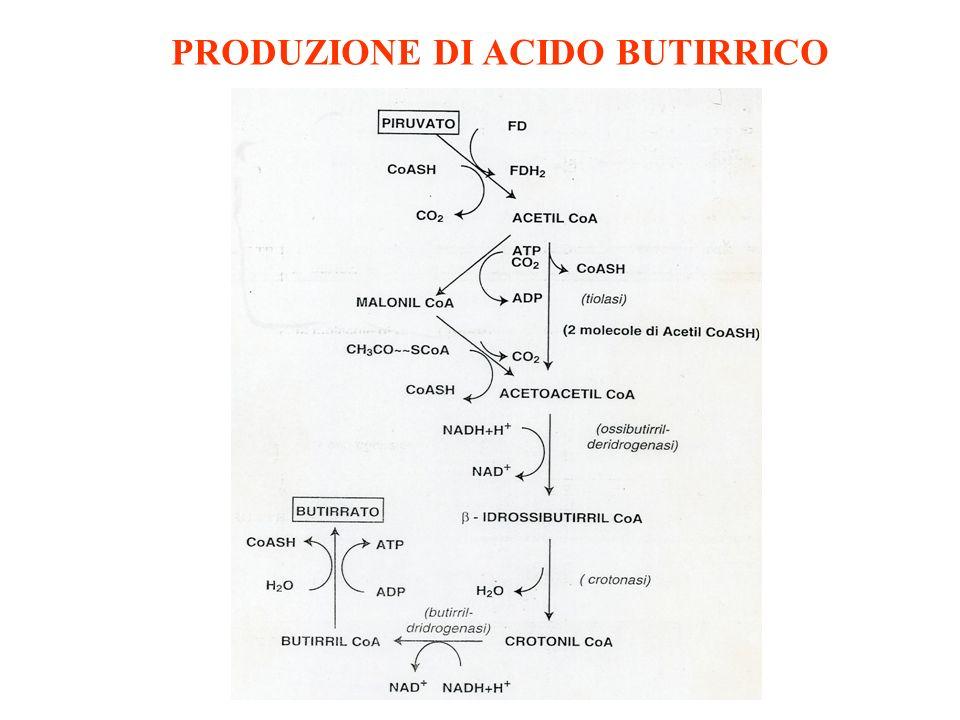 PRODUZIONE DI ACIDO BUTIRRICO