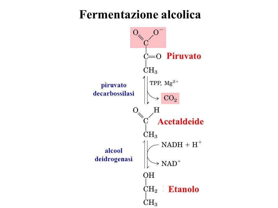 Fermentazione alcolica