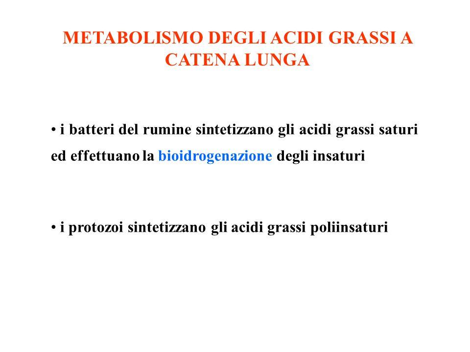 METABOLISMO DEGLI ACIDI GRASSI A CATENA LUNGA