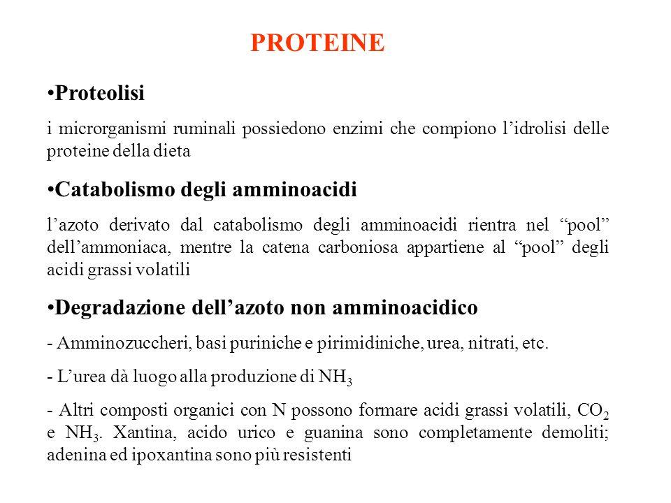 PROTEINE Proteolisi Catabolismo degli amminoacidi