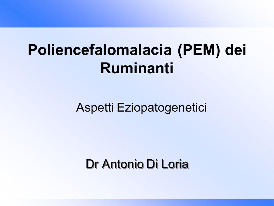 Poliencefalomalacia (PEM) dei Ruminanti