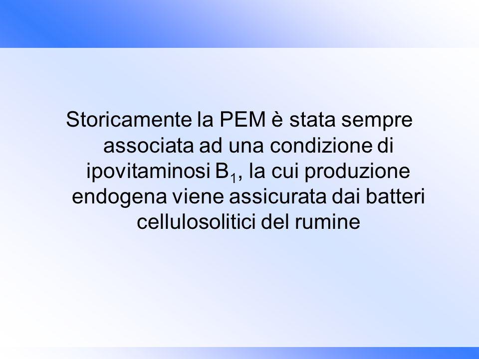 Storicamente la PEM è stata sempre associata ad una condizione di ipovitaminosi B1, la cui produzione endogena viene assicurata dai batteri cellulosolitici del rumine