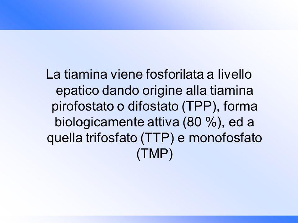 La tiamina viene fosforilata a livello epatico dando origine alla tiamina pirofostato o difostato (TPP), forma biologicamente attiva (80 %), ed a quella trifosfato (TTP) e monofosfato (TMP)