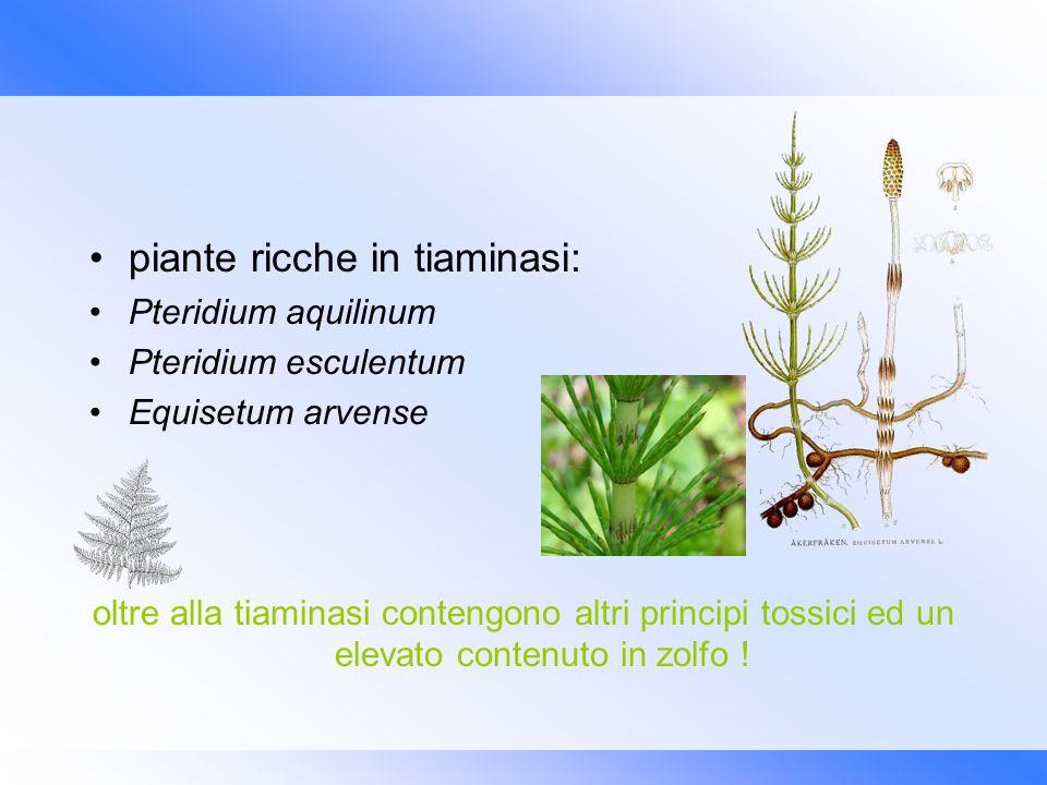 piante ricche in tiaminasi: