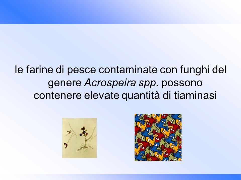 le farine di pesce contaminate con funghi del genere Acrospeira spp