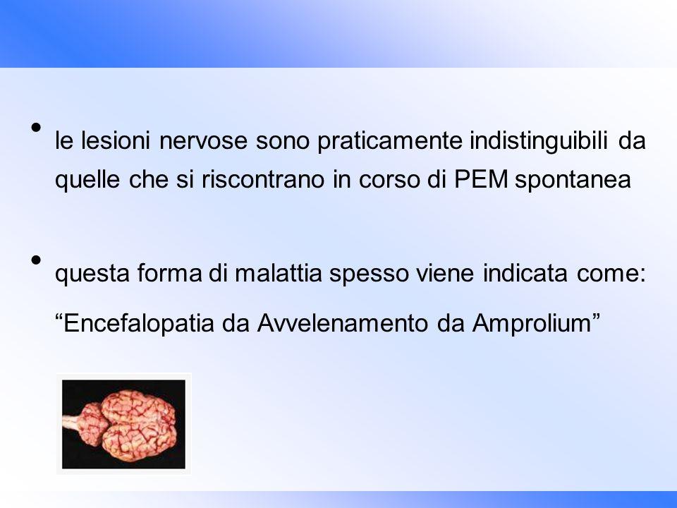 le lesioni nervose sono praticamente indistinguibili da quelle che si riscontrano in corso di PEM spontanea