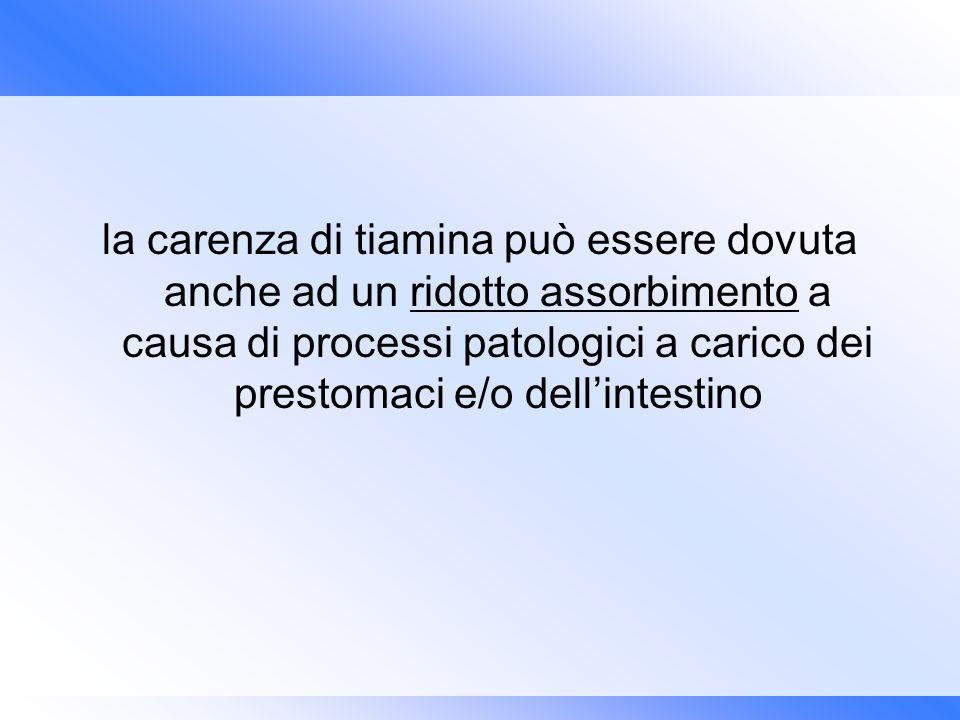 la carenza di tiamina può essere dovuta anche ad un ridotto assorbimento a causa di processi patologici a carico dei prestomaci e/o dell'intestino