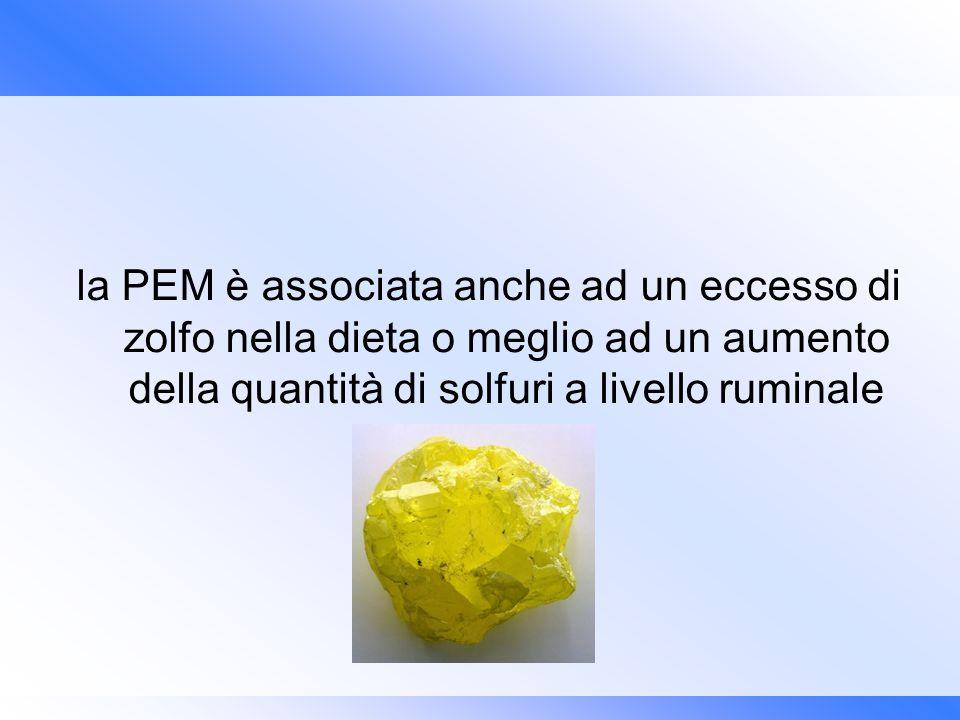 la PEM è associata anche ad un eccesso di zolfo nella dieta o meglio ad un aumento della quantità di solfuri a livello ruminale