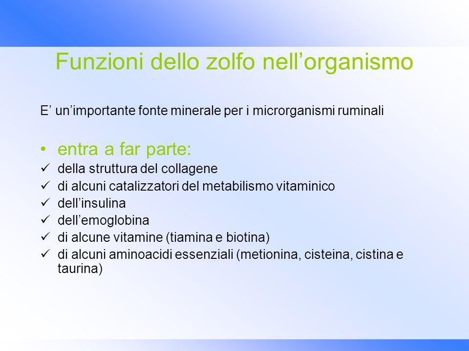 Funzioni dello zolfo nell'organismo