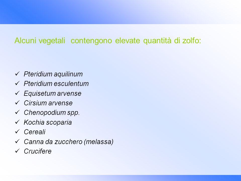 Alcuni vegetali contengono elevate quantità di zolfo: