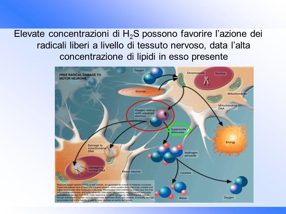 Elevate concentrazioni di H2S possono favorire l'azione dei radicali liberi a livello di tessuto nervoso, data l'alta concentrazione di lipidi in esso presente