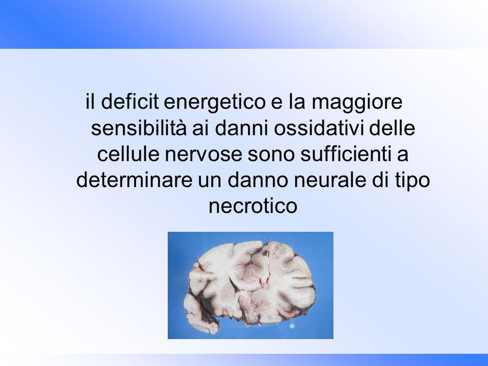 il deficit energetico e la maggiore sensibilità ai danni ossidativi delle cellule nervose sono sufficienti a determinare un danno neurale di tipo necrotico