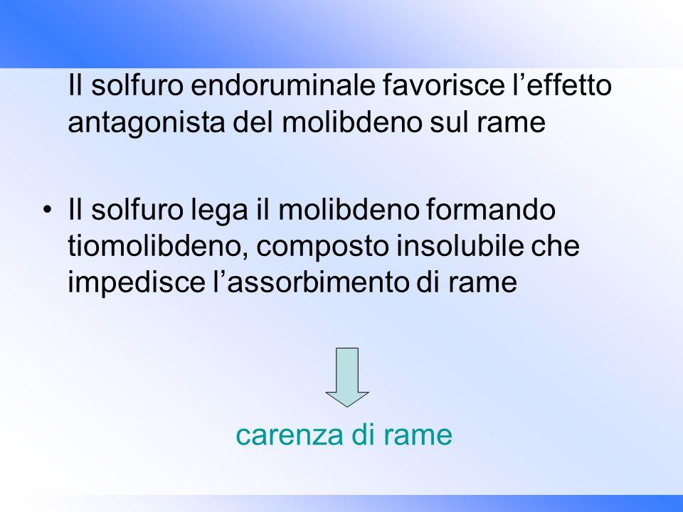 Il solfuro endoruminale favorisce l'effetto antagonista del molibdeno sul rame