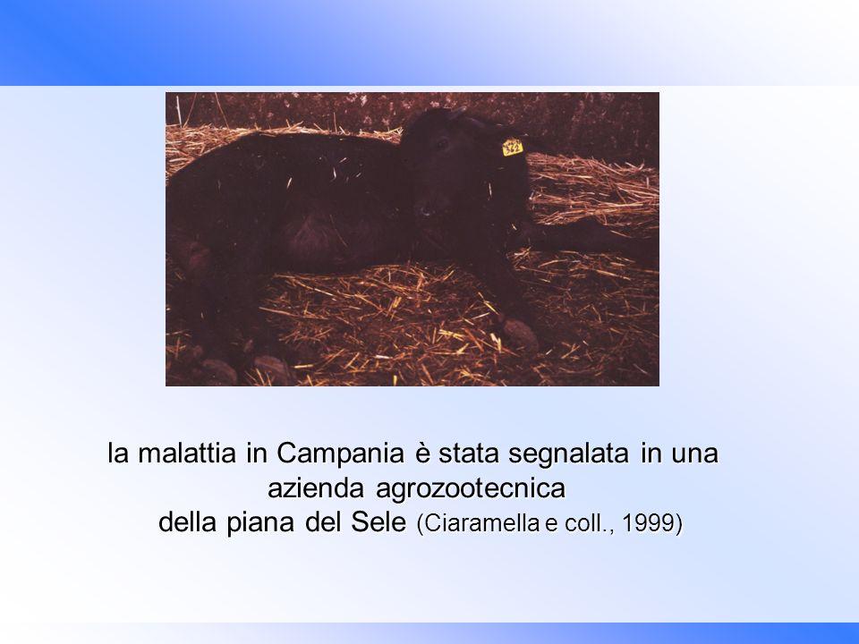 l la malattia in Campania è stata segnalata in una