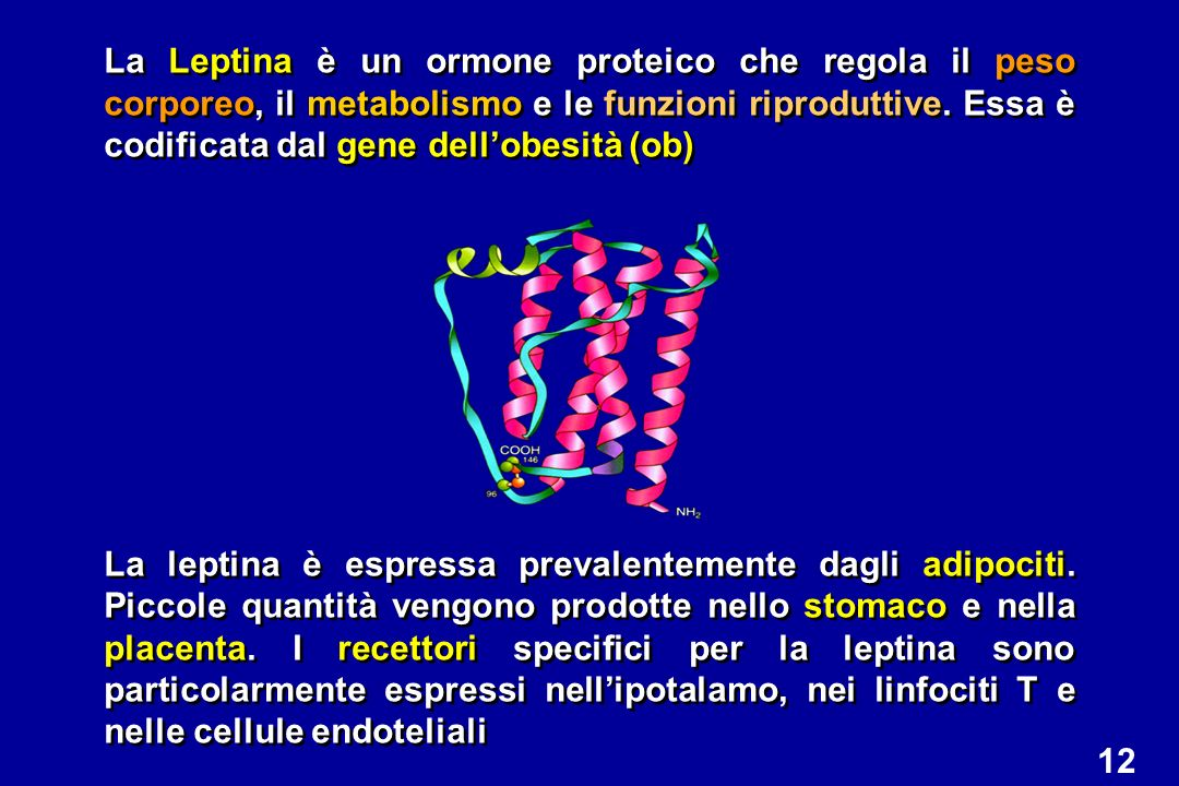 La Leptina è un ormone proteico che regola il peso corporeo, il metabolismo e le funzioni riproduttive. Essa è codificata dal gene dell'obesità (ob)