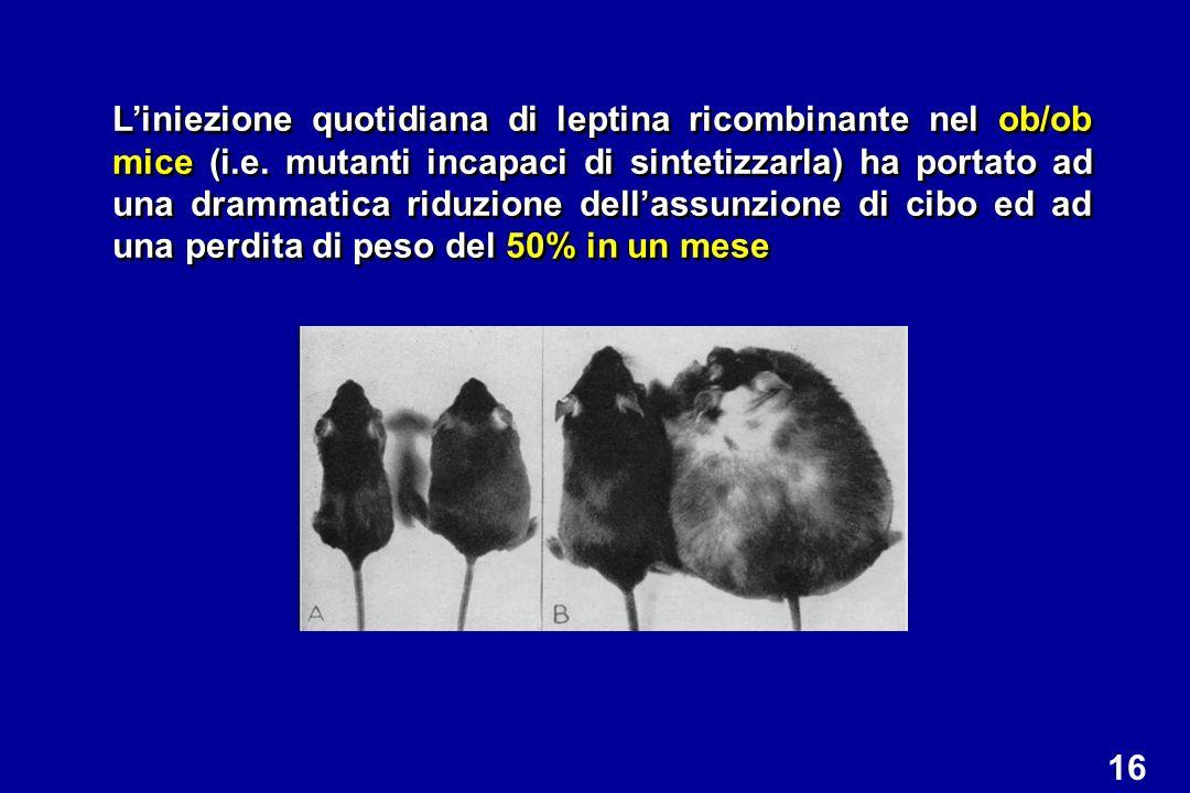 L'iniezione quotidiana di leptina ricombinante nel ob/ob mice (i. e