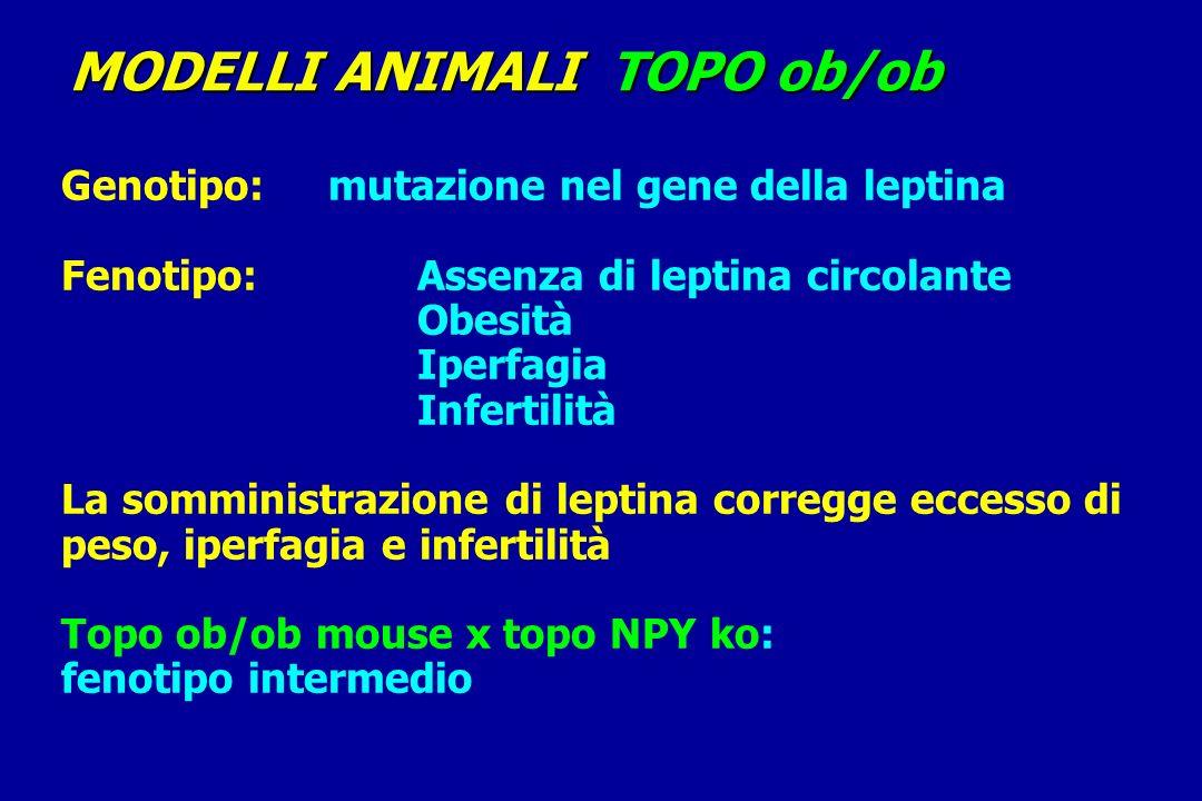 MODELLI ANIMALI TOPO ob/ob