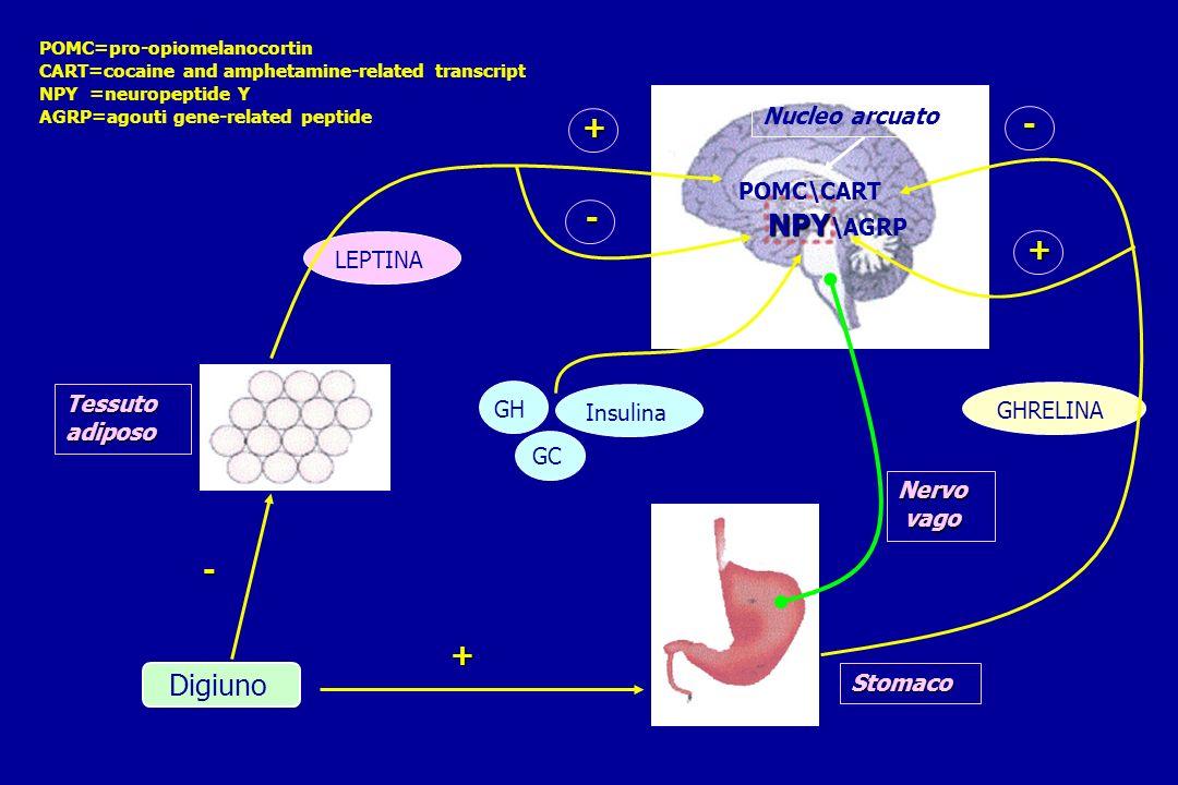 + - - NPY\AGRP + - + Digiuno Nucleo arcuato POMC\CART LEPTINA