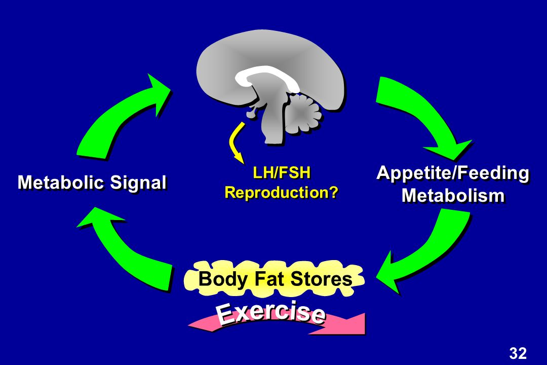 Body Fat Stores Appetite/Feeding Metabolic Signal Metabolism Exercise