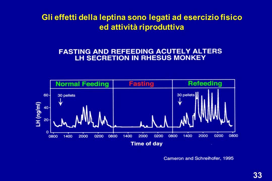 Gli effetti della leptina sono legati ad esercizio fisico ed attività riproduttiva