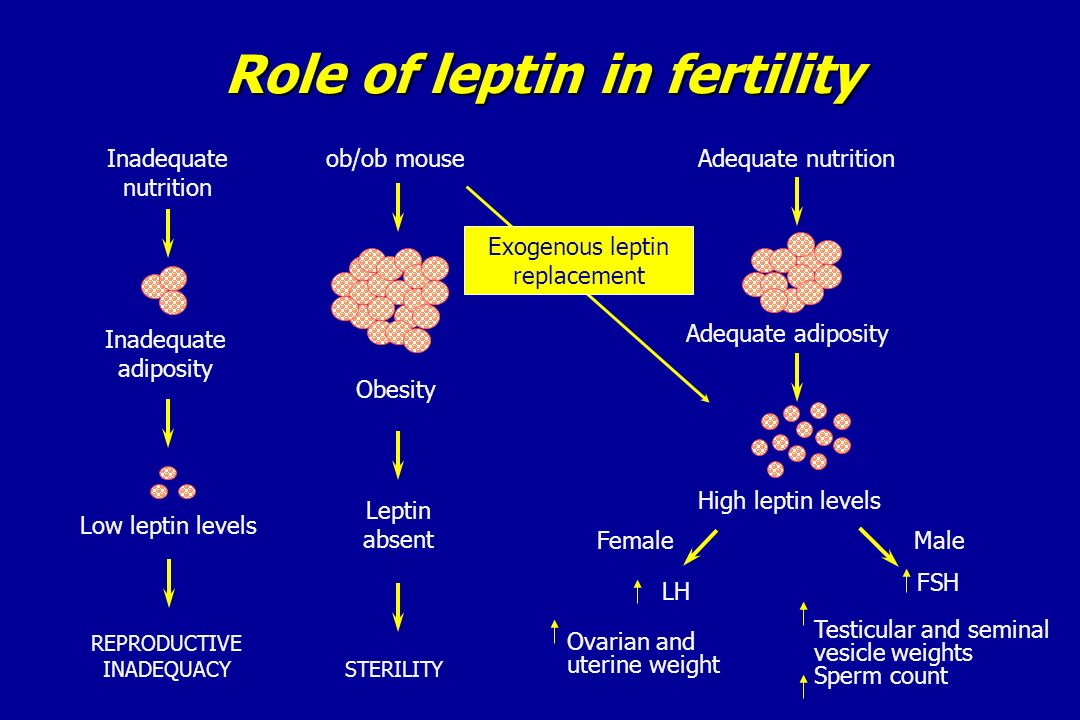 Role of leptin in fertility
