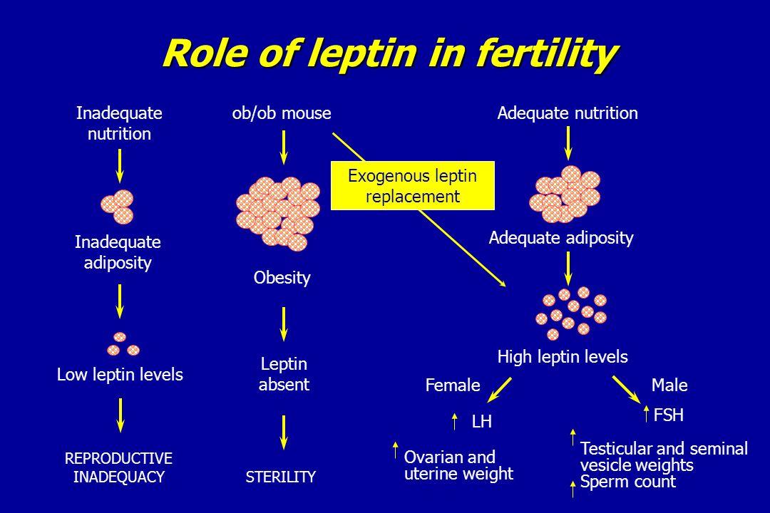 Role of leptin in fertility