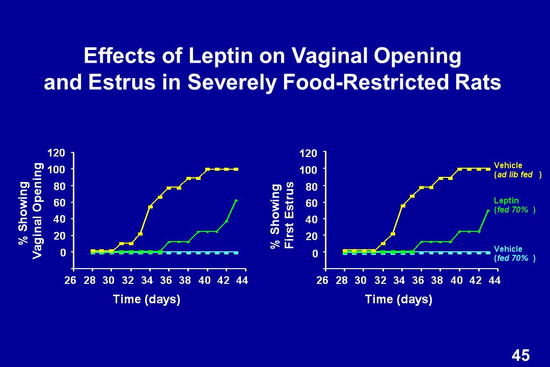 Effects of Leptin on Vaginal Opening