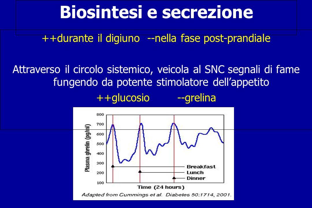 Biosintesi e secrezione