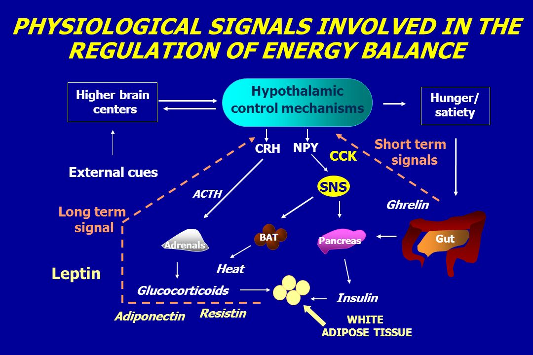 PHYSIOLOGICAL SIGNALS INVOLVED IN THE REGULATION OF ENERGY BALANCE