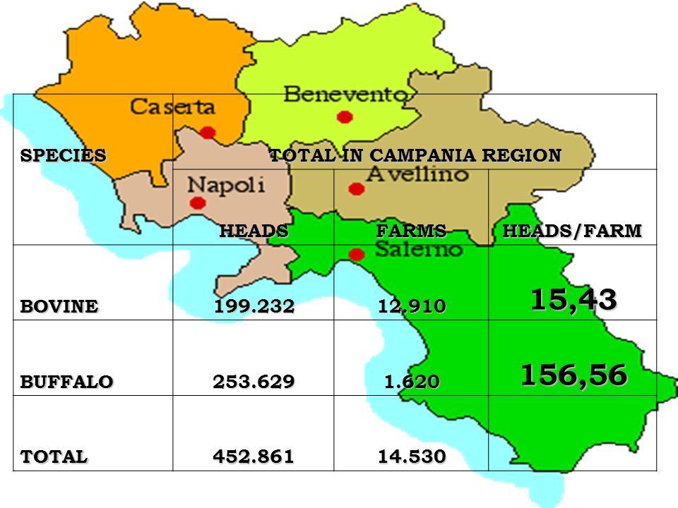 TOTAL IN CAMPANIA REGION